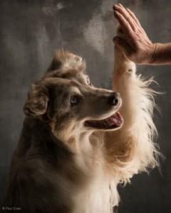 Hondenschool Limburg: Clickertraining