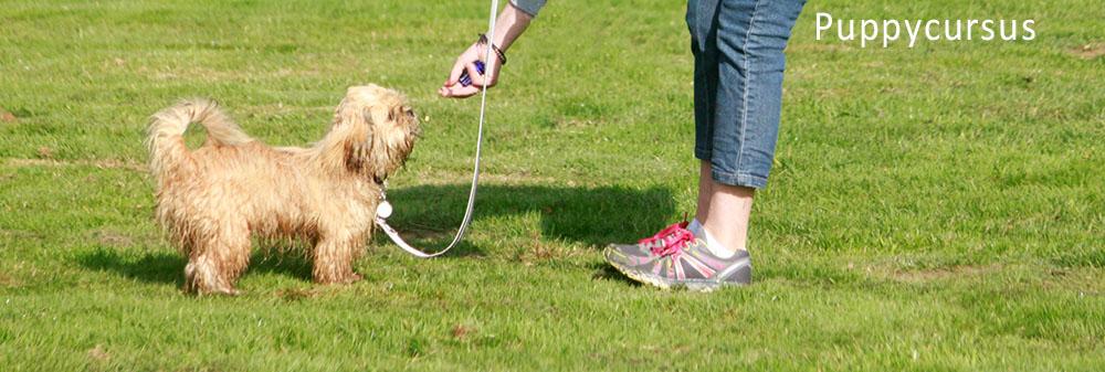 Hondenschool Limburg puppycursus A