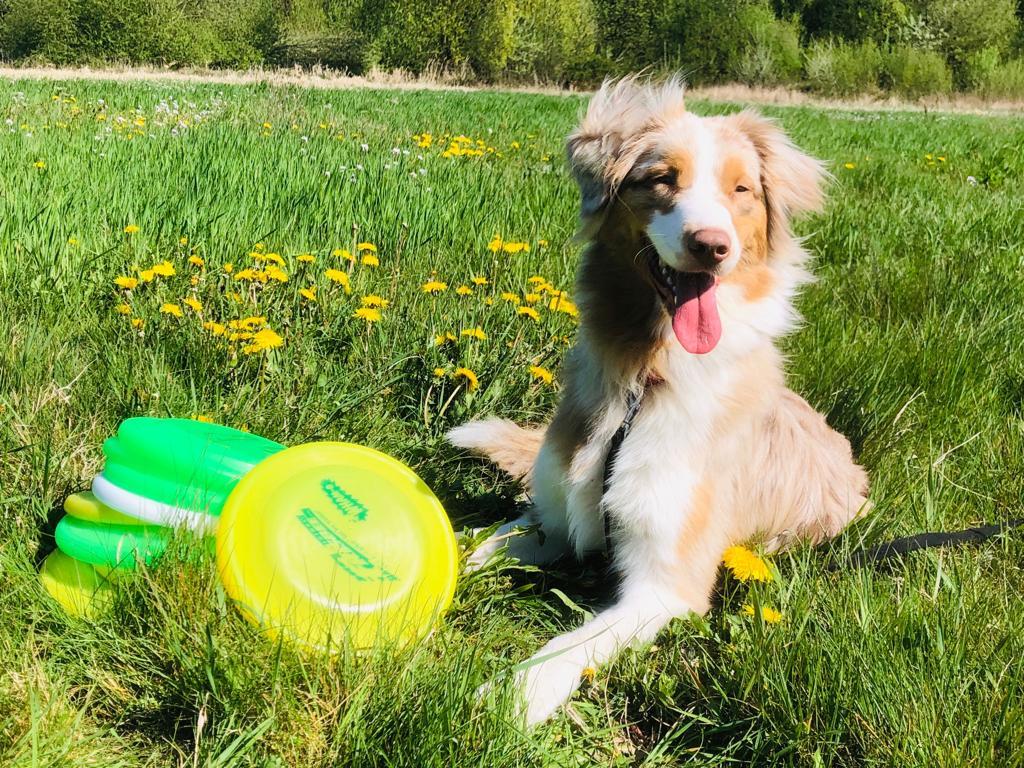 Frisbee cursus puppy