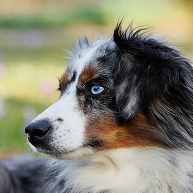Hondenschool Limburg, Puppycursus en gehoorzaamheidstraining voor je hond