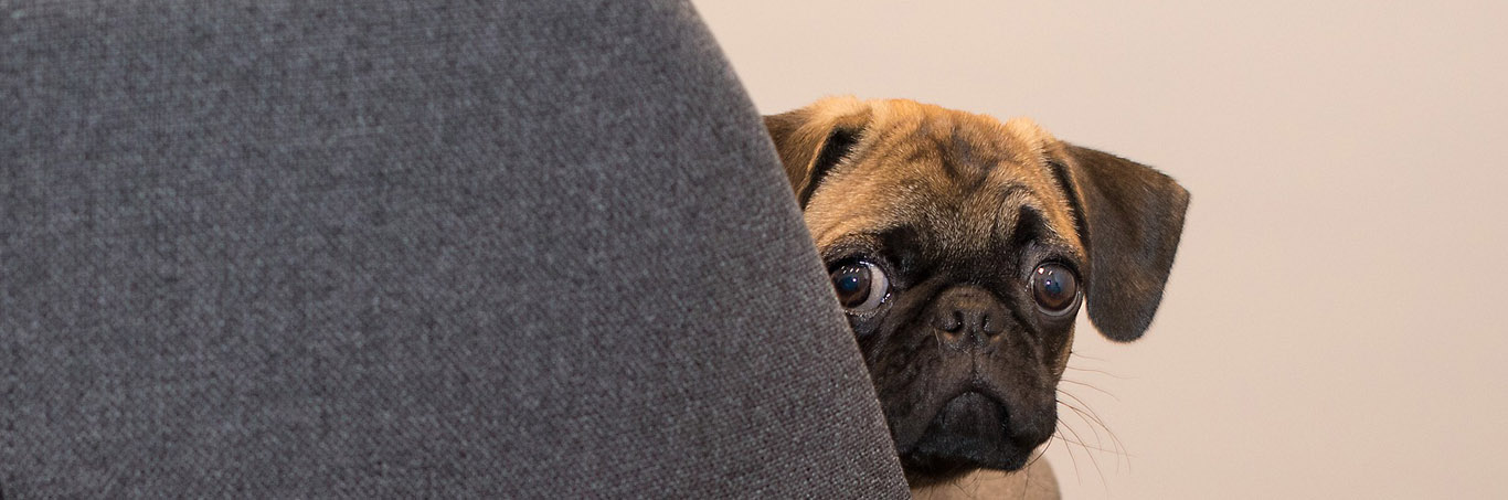 gedragsproblemen bij je hond