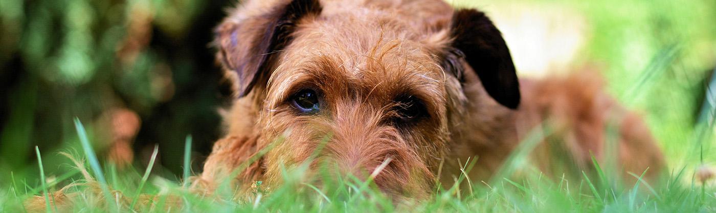 Hondenschool Limburg en puppycursus