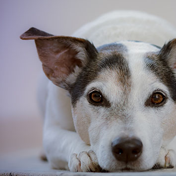 nschool limburg puppycursus