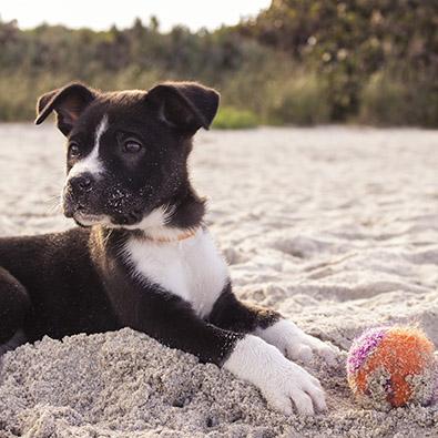 hondenschool limburg puppycursus